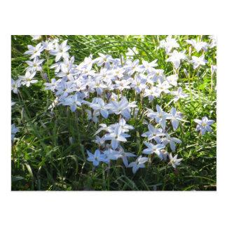 Flower Cluster Postcard