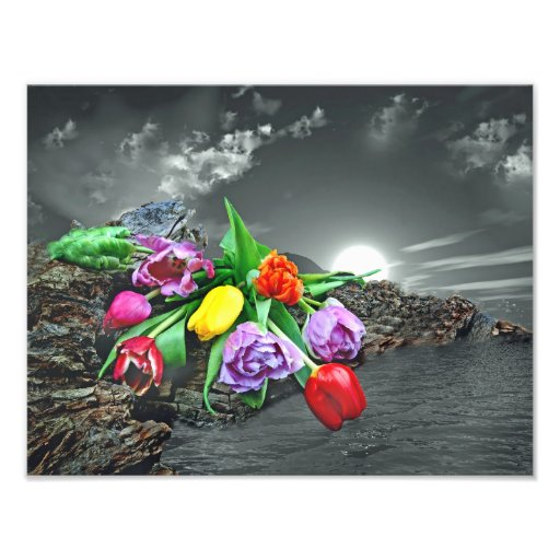 Flower country… photographic print