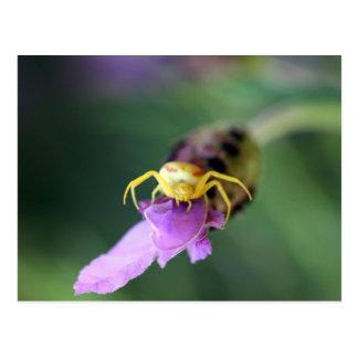 Flower Crab Spider Postcard
