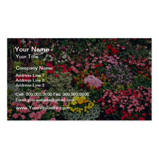 Flower exhibition, County Show, England  flowers Pack Of Standard Business Cards