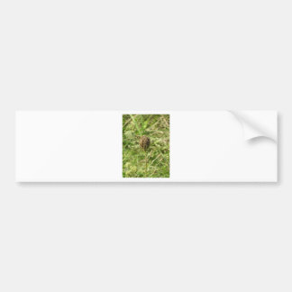 Flower- Faded Glory Bumper Sticker
