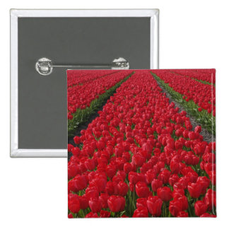 Flower field of tulips, Netherlands, Holland 15 Cm Square Badge