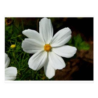 Flower flowers motive postcard