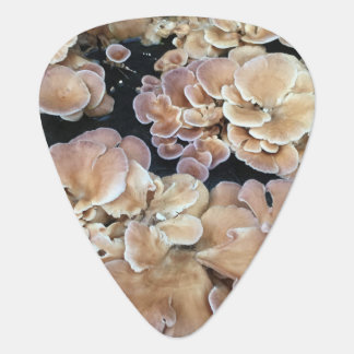 Flower Fungi Guitar Pick