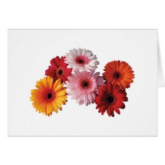 Flower Garden - Gerber Daisies Card