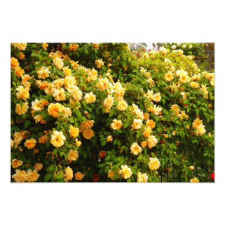 Flower Garden Photo Print