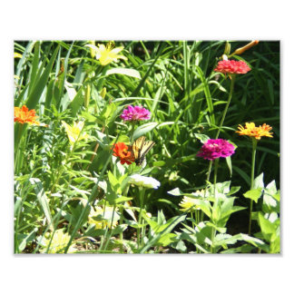 Flower garden with a Butterfly. Photographic Print