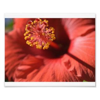 Flower in bloom photo print