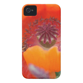 Flower in Red iPhone 4 Cases
