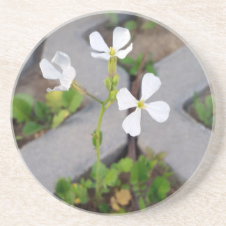Flower in the parking lot coaster