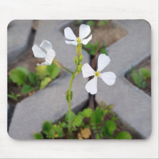 Flower in the parking lot mouse pad