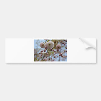 Flower in the Spring Bumper Sticker