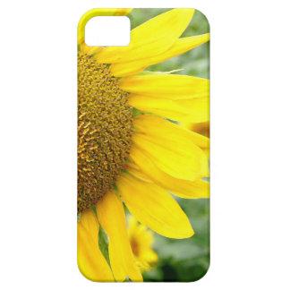 Flower iPhone 5 Cases Sunflower