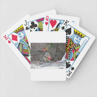 Flower Loving Squirrel Bicycle Playing Cards