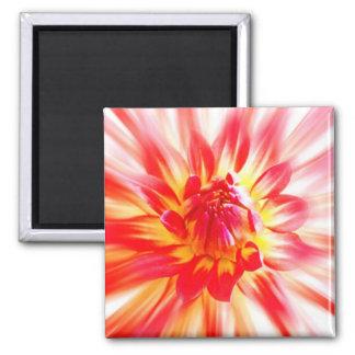 Flower Magnets
