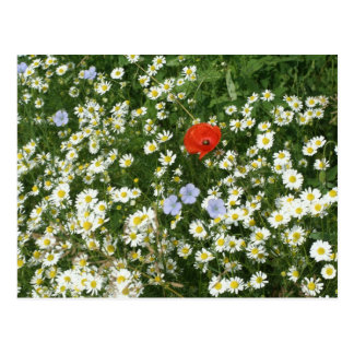 flower meadow postcard