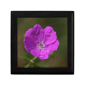 Flower of a bloody geranium small square gift box