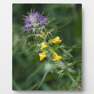 Flower of a crested cow wheat photo plaques