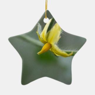 Flower of a Cucumber  plant Ceramic Star Decoration