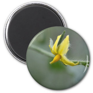 Flower of a Cucumber  plant Magnet