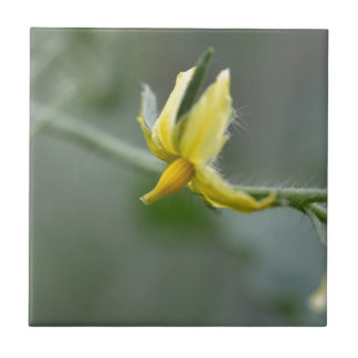 Flower of a Cucumber  plant Small Square Tile