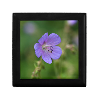 Flower of a meadow geranium small square gift box