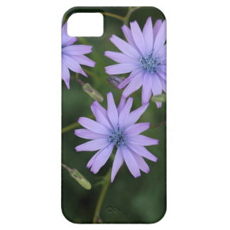 Flower of a mountain lettuce barely there iPhone 5 case