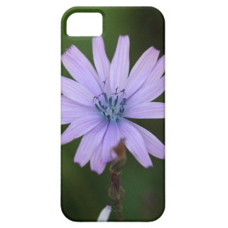 Flower of a mountain lettuce iPhone 5 cases