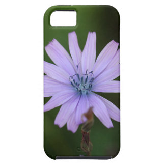 Flower of a mountain lettuce iPhone 5 covers