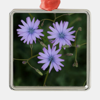 Flower of a mountain lettuce Silver-Colored square decoration