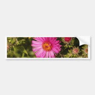 Flower of a New England aster Bumper Sticker
