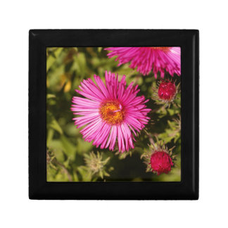 Flower of a New England aster Gift Box