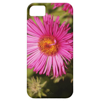 Flower of a New England aster iPhone 5 Cover