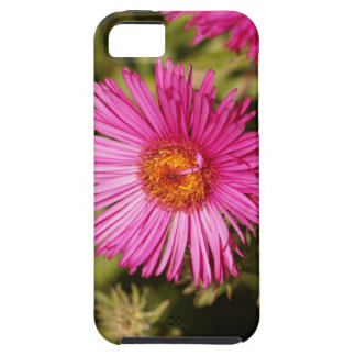 Flower of a New England aster iPhone 5 Covers