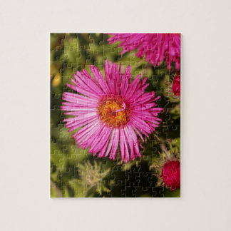 Flower of a New England aster Jigsaw Puzzle