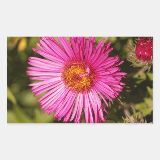 Flower of a New England aster Rectangular Sticker