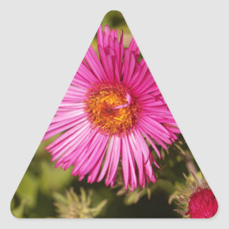 Flower of a New England aster Triangle Sticker