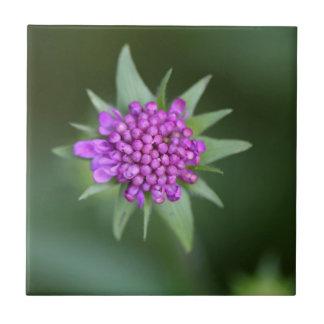 Flower of a Scabiosa lucida Ceramic Tile