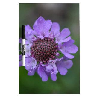 Flower of a Scabiosa lucida Dry Erase Board