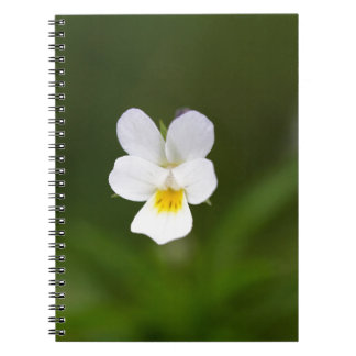 Flower of a wild field pansy spiral note book