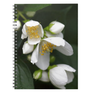 Flower of an English dogwood bush Note Books