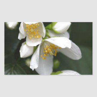 Flower of an English dogwood bush Rectangular Sticker