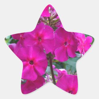 Flower of Love Star Stickers