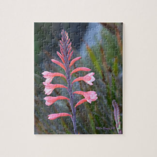 Flower of on Table Mountain Jigsaw Puzzle