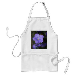 Flower of perennial or blue flax standard apron