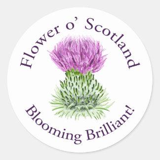 Flower of Scotland – Blooming Brilliant! Sticker