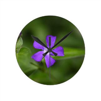 Flower of the bigleaf periwinkle (Vinca major). Wallclock