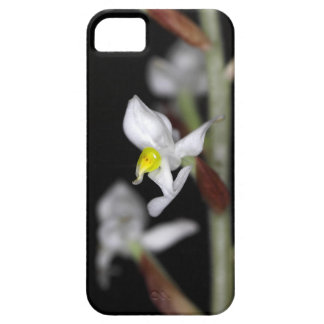 Flower of the orchid Ludisia discolor Case For The iPhone 5