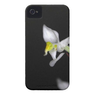 Flower of the orchid Ludisia discolor iPhone 4 Case-Mate Case