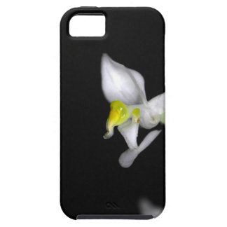 Flower of the orchid Ludisia discolor iPhone 5 Case